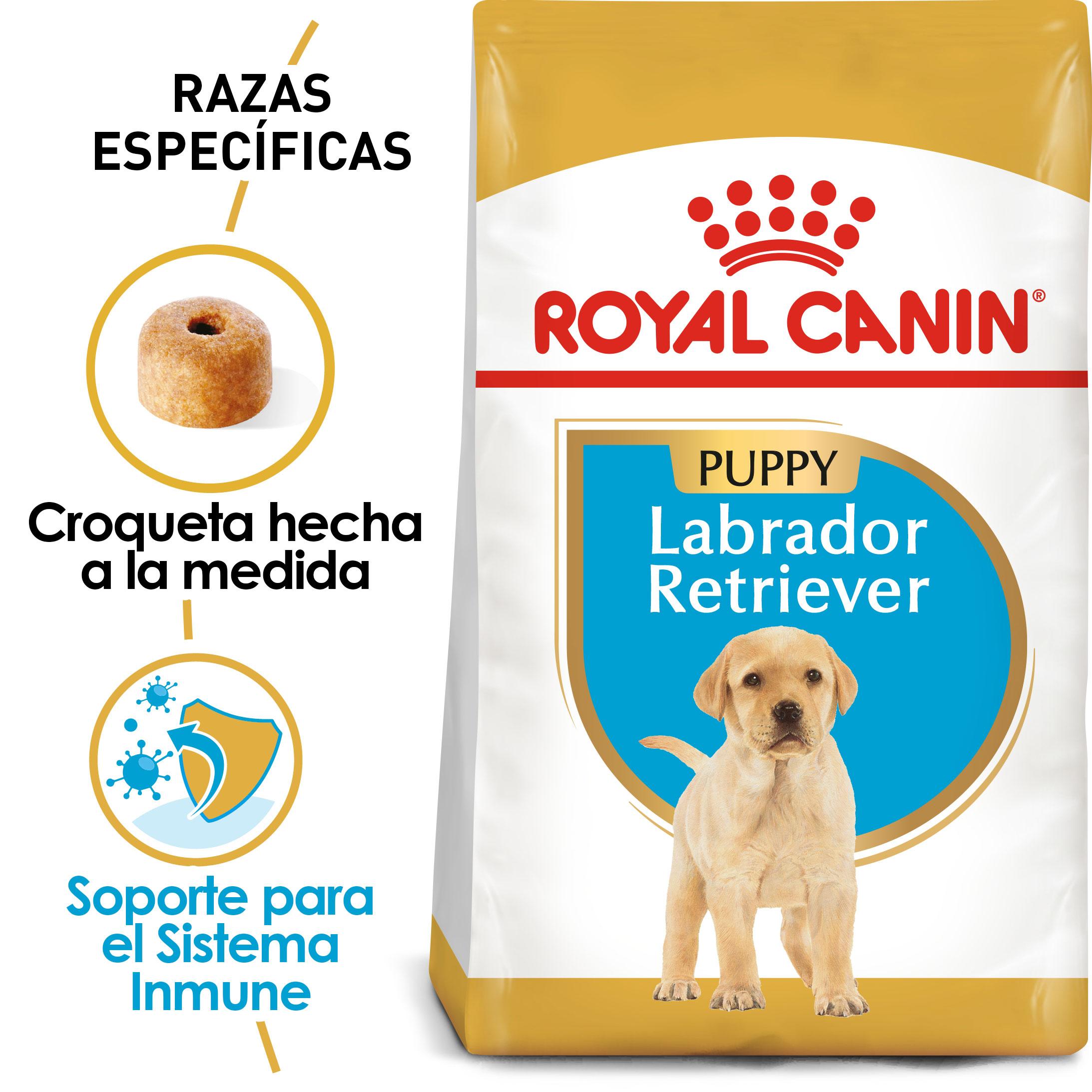 Labrador_Retriever_Puppy_Hero_NEW